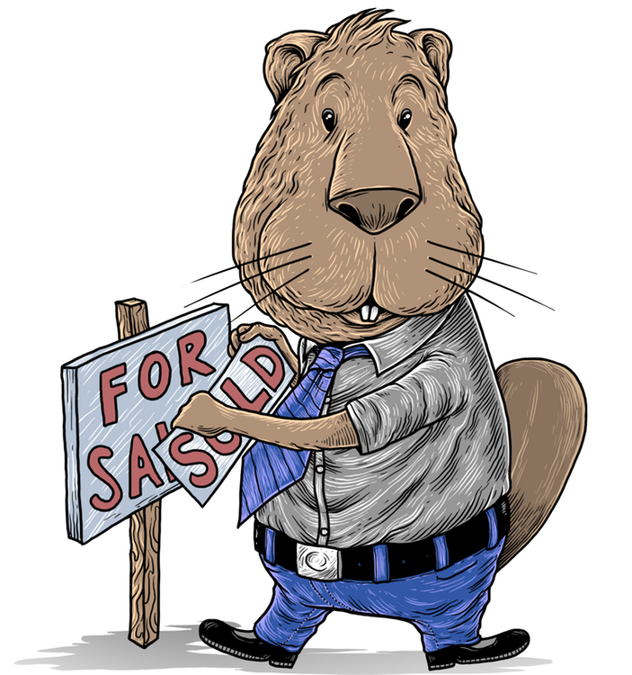 Roger the real estate agent beaver with a For Sale sign